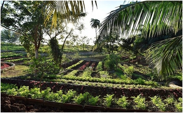Example of polyculture in Cuba.